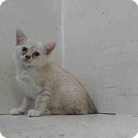 Adopt A Pet :: *HAZEL - Orlando, FL