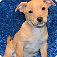 Adopt A Pet :: Rayon - Yreka, CA