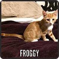 Adopt A Pet :: Froggy - Whitehall, PA
