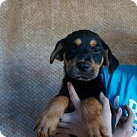 Adopt A Pet :: Lexis - Oviedo, FL