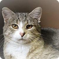 Adopt A Pet :: Aero - West Des Moines, IA