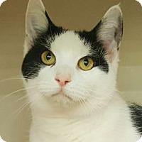 Adopt A Pet :: Plumb - Walworth, NY
