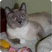 Adopt A Pet :: Marlow - Marietta, GA