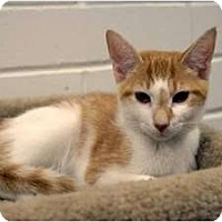 Adopt A Pet :: Bernie - New Port Richey, FL