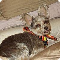 Adopt A Pet :: Sylvia - Phoenix, AZ