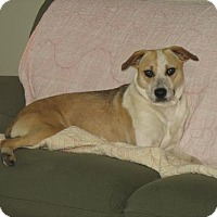 Terrier (Unknown Type, Medium) Mix Dog for adoption in Poland, Indiana - Sydney