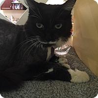 Adopt A Pet :: Anastasia - Boca Raton, FL