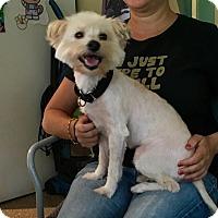 Adopt A Pet :: OLIVER - Boca Raton, FL