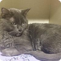 Adopt A Pet :: Vampire (Vlad) - Pueblo, CO