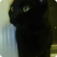 Adopt A Pet :: Coco - Hamburg, NY