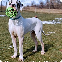 Adopt A Pet :: Paul - Pearl River, NY