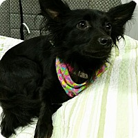 Adopt A Pet :: Onyx Montgomery - Urbana, OH