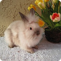 Adopt A Pet :: Puff and Fluff - Bonita, CA