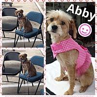 Adopt A Pet :: Abby - Brownsville, TX