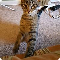 Adopt A Pet :: Magellan - Bensalem, PA