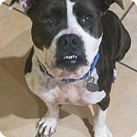 Adopt A Pet :: RUTH CHRIS - Liverpool, TX