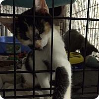 Adopt A Pet :: Hope - Byron Center, MI
