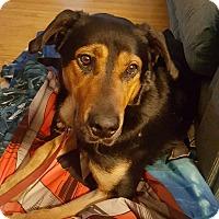 Shepherd (Unknown Type) Mix Dog for adoption in ottawa, Ontario - Charlie