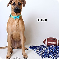 Adopt A Pet :: Ted - Luling, LA