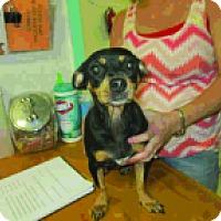 Adopt A Pet :: Poochie - Seminole, FL