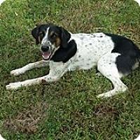 Adopt A Pet :: Anabel - Buffalo, NY