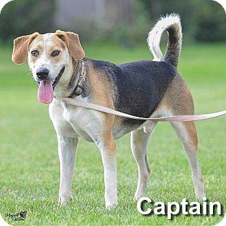 Coonhound (Unknown Type) Mix Dog for adoption in Ottumwa, Iowa - Captain