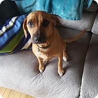 Adopt A Pet :: Fancy D3118 - Shakopee, MN