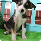 Adopt A Pet :: Callen