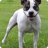 Adopt A Pet :: Judd - Michigan City, IN