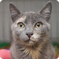 Adopt A Pet :: Lizzy - Alameda, CA