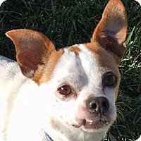 Adopt A Pet :: Roscoe - St Louis, MO