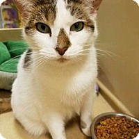 Adopt A Pet :: Mia 2 - PetSmart - Kalamazoo, MI