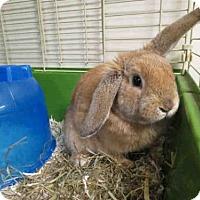 Adopt A Pet :: EARS - Toronto, ON