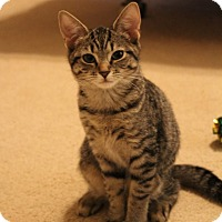 Adopt A Pet :: Unity - Youngsville, NC