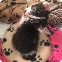 Adopt A Pet :: Gladys - Jacksonville, FL
