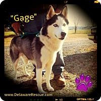 Adopt A Pet :: Gage - Seaford, DE