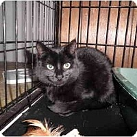 Adopt A Pet :: Shadow - Warren, MI