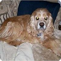 Adopt A Pet :: Shadow - Tacoma, WA