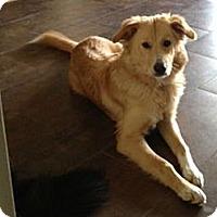 Adopt A Pet :: Luna - Denver, CO
