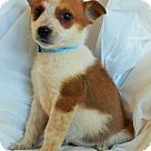 Adopt A Pet :: Alison