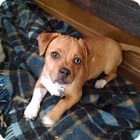 Adopt A Pet :: Azul - Simi Valley, CA