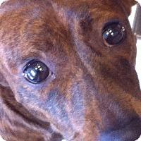 Adopt A Pet :: Franny - San Francisco, CA