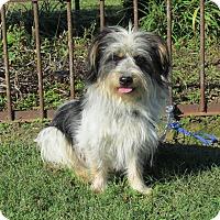 Adopt A Pet :: OREO - Bedminster, NJ