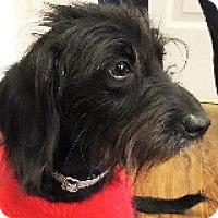 Adopt A Pet :: Whimsy Willamette - Houston, TX