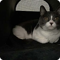 Adopt A Pet :: Kenny - Laguna Woods, CA
