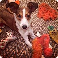 Adopt A Pet :: Shamokin - Thompson's Station, TN