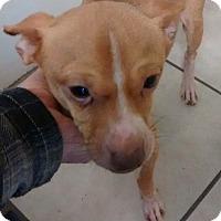 Adopt A Pet :: Cappy - Irmo, SC