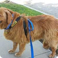 Adopt A Pet :: Princella - Los Angeles, CA