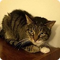 Adopt A Pet :: Winnifer - Addison, IL