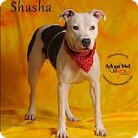 Adopt A Pet :: Shasha - Topeka, KS